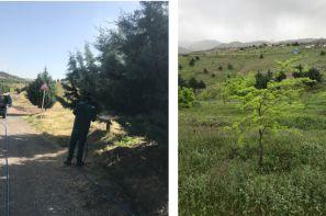 ارائه مشاوره  در انتخاب گونه های فضای سبز
