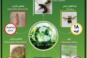 پوستر ترویجی : تنوع زیستی حشرات جنگلها و مراتع استان قزوین