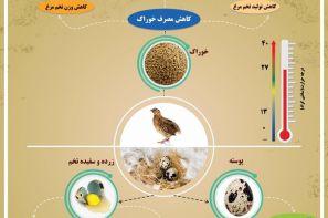 پوستر ترویجی: اثرات تنش گرمایی در بلدرچین های تخم گذار