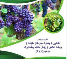 نشریه ترویجی آشنایی با بیماری سرطان طوقه و ریشه انگور و روش های پیشگیری و مبارزه با آن