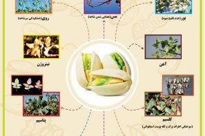پوستر ترویجی : علائم کمبود عناصر غذایی در پسته
