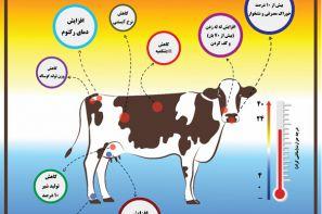 پوستر ترویجی : اثرات تنش گرمایی در گاوهای شیری