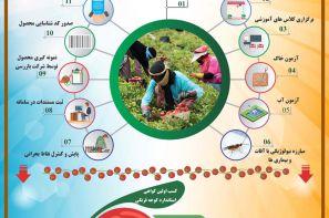 پوستر ترویجی : روند تولید محصول گواهی شده گوجه فرنگی
