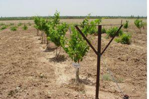 ارائه دانش فنی احداث سیستم داربستی باغ انگور