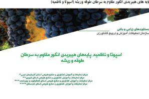 پایه های هیبریدی انگور مقاوم به سرطان طوقه