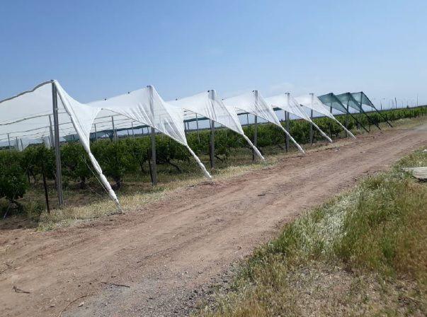 سایبان انگور مرکز تحقیقات و آموزش کشاورزی و منابع طبیعی استان قزوین